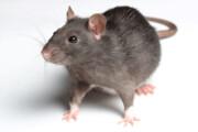 نبرد بیامان با موشهای نروژی تهران