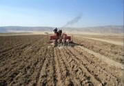 ۱۳۲ هزار هکتار از مزارع کهگیلویه و بویراحمد زیر کشت پاییزه رفت