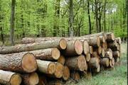 پای قاچاقچیان بر گلوی جنگلهای طارم