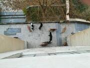 تصمیم جدید برای زندهگیری سگهای بدونصاحب تهران