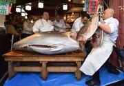 عکس روز| ماهی تون بلوفین
