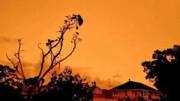 آسمان نیوزیلند هم نارنجی شد