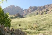 ۷۶۲ هکتار از اراضی منابعطبیعی کردستان رفع تصرف شد