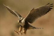 ممنوعیت نگهداری گونههای جانوری وحشی توسط اشخاص