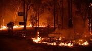 بحران اقلیمی آتشسوزیهای جنگلی استرالیا را از کنترل خارج کرده است