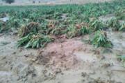 ابلاغ کمک بلاعوض ۵.۶ میلیاردی به کشاورزان خسارتدیده سیل گیلان