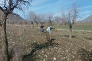غنیسازی ۲۰۳ هکتار از مراتع کردستان