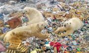 عکس   جستجوی خرسهای قطبی در انبوه زبالهها