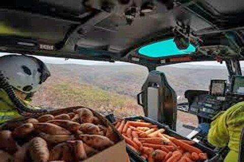 ارسال غذا براي حيوانات گرفتار آتش