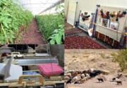 اشتغال بیش از ۲ هزار نفر در تعاونیهای روستایی قزوین