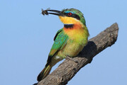 قتل عام ۵۰۰ پرنده برای حفاظت از کندوهای عسل