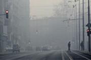 فیلم | ماجرای حمله سوسکهای قرمز به پایتخت