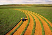 تجلیل از ۴ تولیدکننده نمونه بخش کشاورزی در چهارمحال و بختیاری