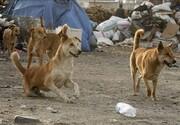 سگهای ولگرد عامل مرگ ۳ نفر | حمله ولگردها به ۳۴ نفر | چند کودک جان خود را از دست دادند؟