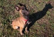 عکس روز | سگ کارآموز جدید