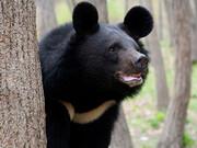 مرگ خرس کمیاب بلوچی در باغوحش دانشگاه زابل |مسئولان باغوحش قصد پنهان کردن  موضوع را داشتند