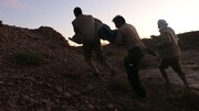 عکس | زندهگیری اولین تمساح سیلزده در بلوچستان
