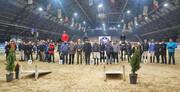 نفرات برتر مسابقه پرش با اسب تور قهرمانی ایران معرفی شدند