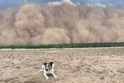 فیلم | توفان بزرگ غبار جنوب شرق استرالیا را در مینوردد