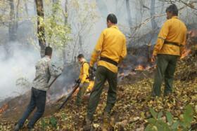 مصوبه مجلس درباره هزینه درمانی محیطبانان و جنگلبانان داوطلب