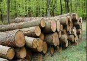 عکس | مامور محیط زیست زیر چرخ خودروی قاچاقچی چوب