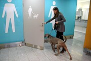 بهترین عکس روز از نگاه گاردین | دستشویی مخصوص سگها در فرودگاه