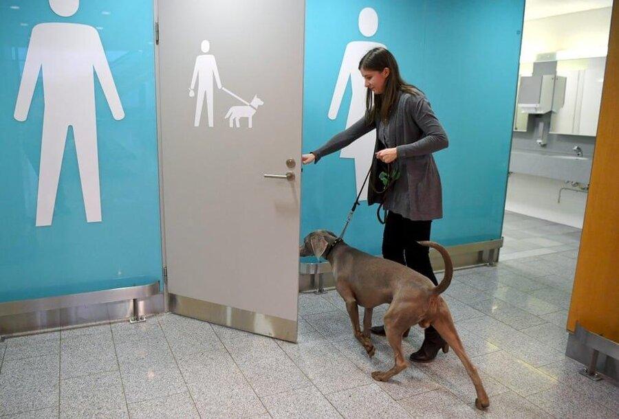 دستشویی مخصوص سگها