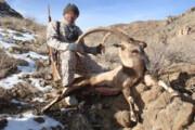 مجازات حبس سنگین برا ی شکارچیان کل وحشی در ارومیه