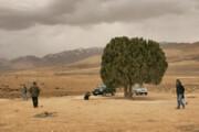اما و اگرهای نصب مجسمه یک کارگردان | تک درخت معروف کیارستمی کجاست؟