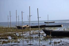 خلیج گرگان در خطر فقر غذایی و انرژی