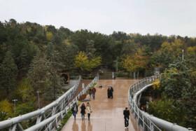 ۳۱ درصد بارش باران در پایتخت امسال کاهش یافت