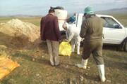 معدومسازی ۴۱ تن خوراک دام آلوده در آذربایجانشرقی