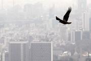 شهرهای صنعتی و پرجمعیت دو روز آینده آلودهاند | پیشبینی وضعیت هوای تهران
