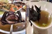 سوپ خفاش ؛ منبع احتمالی کرونا ویروس معرفی شد
