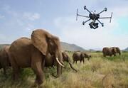 نجات گونههای در حال انقراض با پهپاد