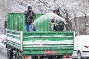 جدال برف و نمک | نمکپاشی چه بلایی سر محیط زیست میآورد؟