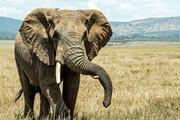 عکس | نزاع حیرتانگیز ۲ فیل نر بر سر قلمرو