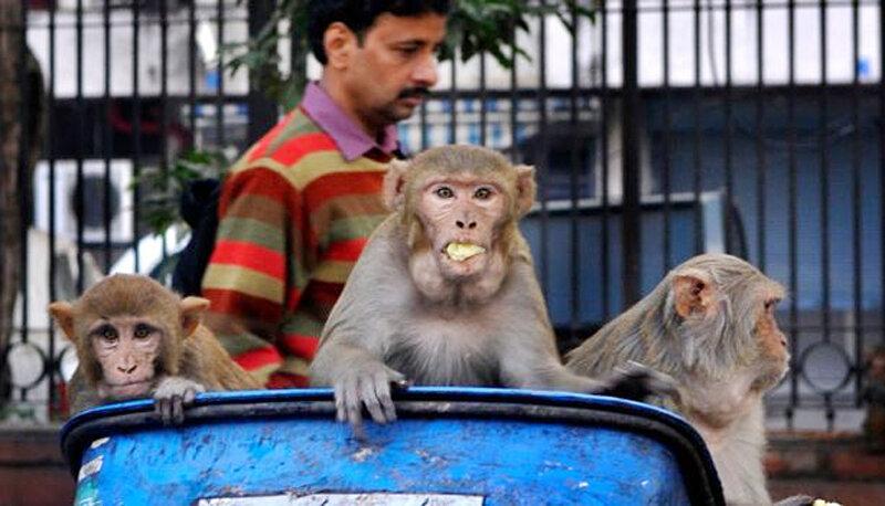ویروس کرونا | چرا امراض بیشتری از حیوانات به انسان منتقل میشود؟