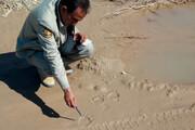 ردِ پای خرس سیاه بلوچی در مناطق جنوبی کرمان