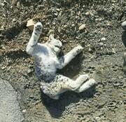 تصاویر | تلف شدن یک گونه نادر از گربهسانان در البرز