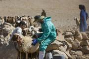 صدور پروانه ساخت ۱۹ داروی دامپزشکی در استان مرکزی