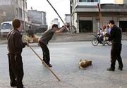 پلیس فتا محیط زیستی شد   تعقیب آگهیهای فروش حیوانات نادر و کلیپهای حیوان آزاری