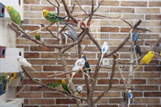 تصویر   افتتاح باغ پرندگان در میبد