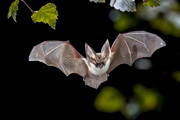 فیلم | لحظه حمله خفاشها به شهر