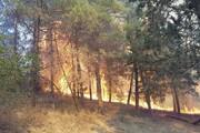 اینفوگرافیک | بلای آتش بر جان جنگلهای شمال