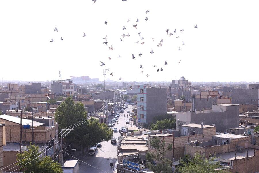 پرواز  کبوترها در آسمان