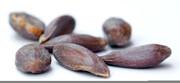 خوردن این دانه خطر مرگ را در پی دارد