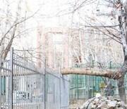 تصاویر | حادثه واژگونی درخت در خیابان ولیعصر | باغ افشار پس از خشکهبری درختان