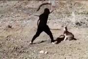 فیلم | قضاوت کنید، کدامیک حیواناند