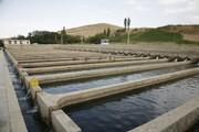 ظرفیت ۳۰ هزار تنی تولید ماهی در چهارمحال و بختیاری